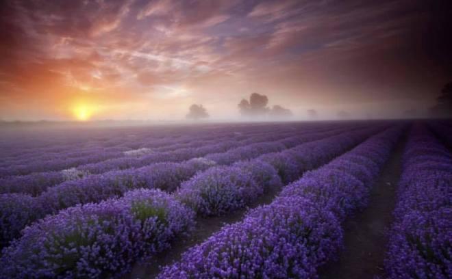 somerset lavender, lavender farm bath, visit lavender farm wiltshire