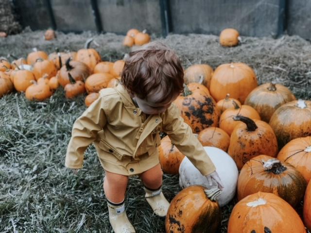 lower drayton pumpkin patch, pumpkin picking staffordshire, pumpkin patch staffordshire