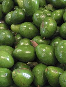 Florida avocados
