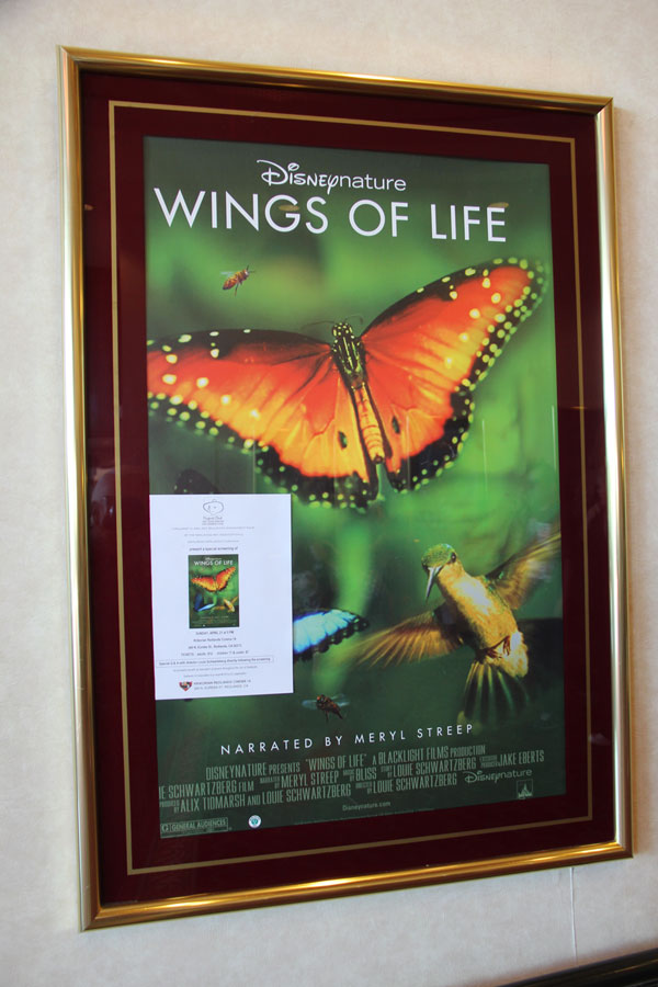 RCCWings-of-life-poster