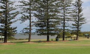 Shade under the Norfolk pines and Moreton Bay figs