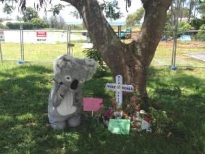 In memory of Ivory Koala