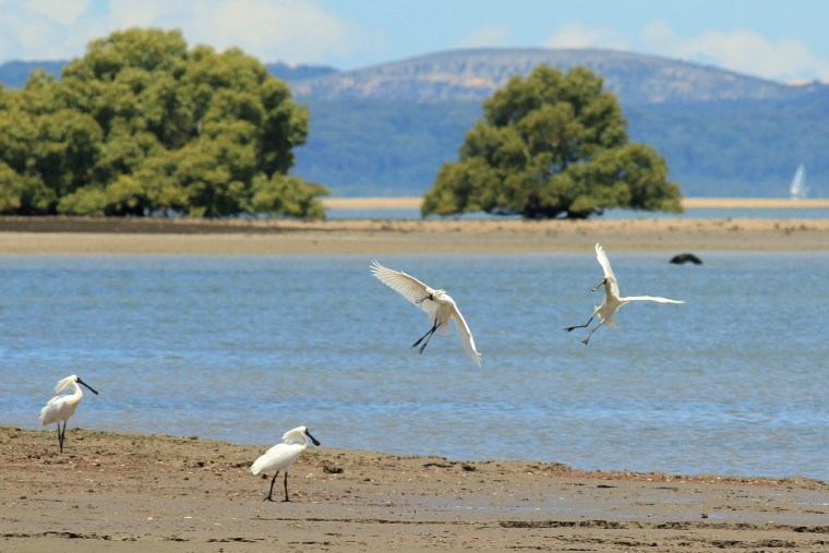 Environmental impacts of a massive dredging and development project at Toondah Harbour will be discussed at a workshop in Cleveland on 30 January