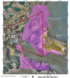 Migratory shorebird foraging habitat from report by BAAM (consultants to Walker Corporation and Redland City Council)