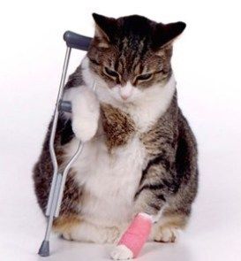 Cat with crutch