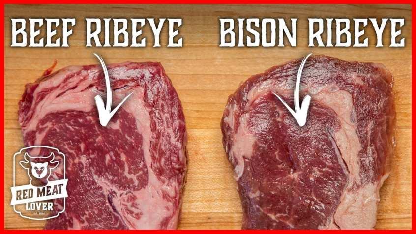bison vs beef