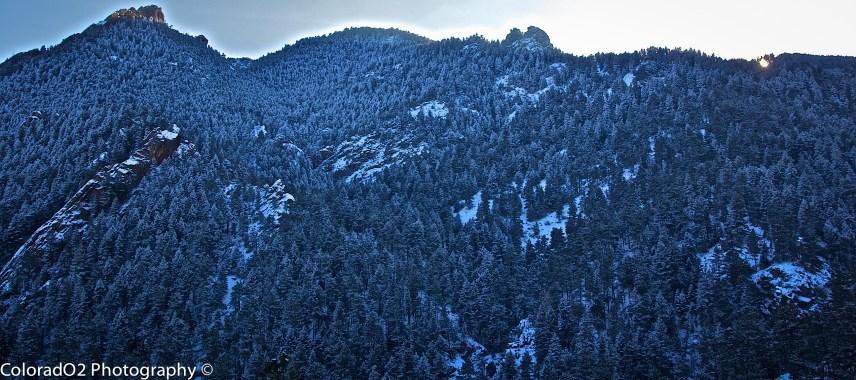 Pine Paradise