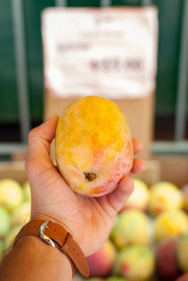 Hand holding a mango that's perfect for terrific tropical salsa recipe.
