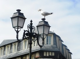 74-gull