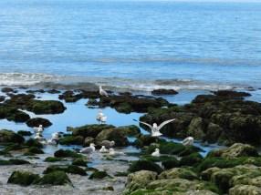 79-low tide