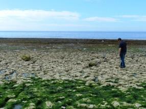 81-low tide