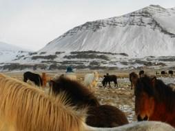 381-more-horses