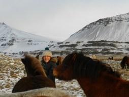 382-more-horses
