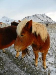 385-more-horses