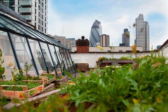 El tejado es la solución para cultivar sin problemas de espacio
