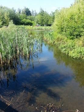 Wetlands Area