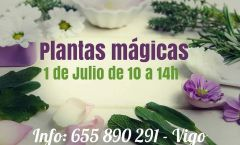 Taller de plantas mágicas