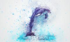 Sanación con energía delfínica turquesa gratuita