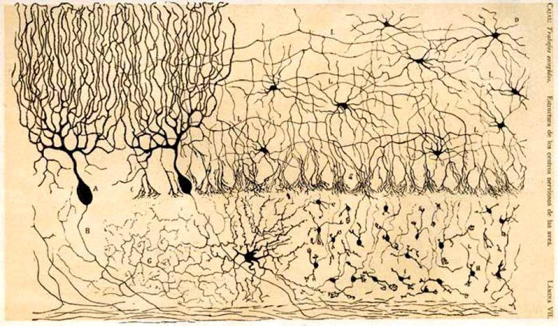 Cajal y su deseo