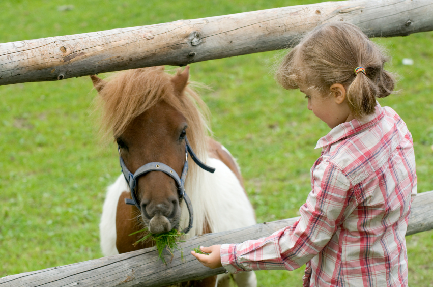Image result for Horse Camps istock