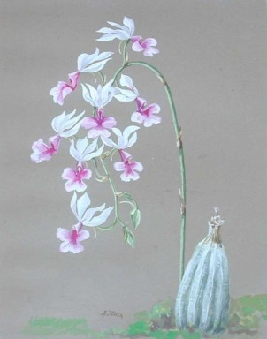 White Orchids (1913)