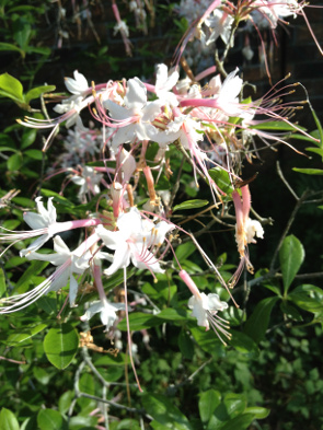 rrpj-flowers3-17mar1