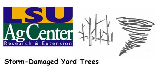 stormdamagedyardtrees