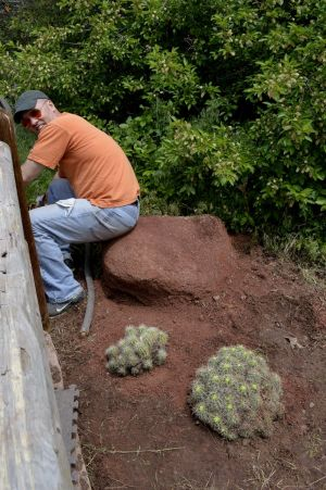 Cy looks on as we see how the cactus will do in their new setting. We're hoping for a successful transition.
