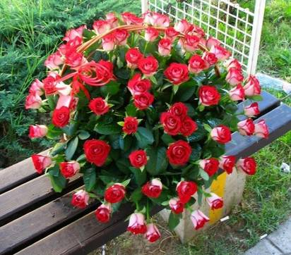 Korpa 101 ruža 7