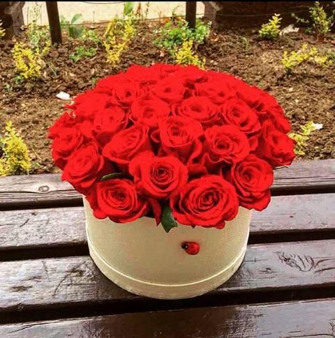 Crvene ruže u bež kutiji