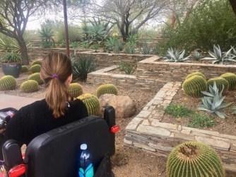 Spring at Desert Botanical Garden