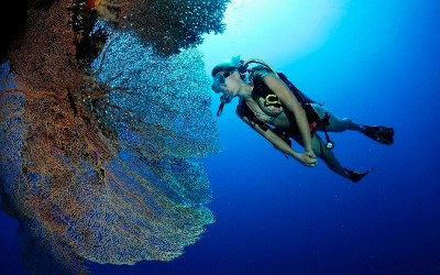 Special Offer 3 Day Dive Pack + Equipment €205