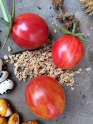 tomate artesano abejorro agroecología permacultura organico ecuador