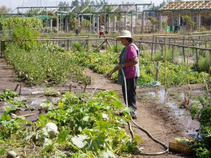 red de guardianes de semillas ecuador agroecologia permacultura organico