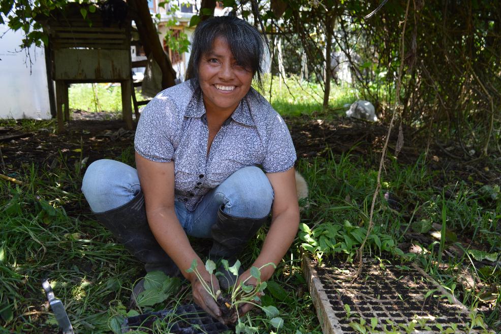 Red de Guardianes de Semillas RGS Ecuador Permacultura Organico