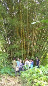 pdc curso de diseño en permacultura ecuador