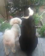 Minnie and BowWow