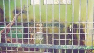 Kebun Binatang Jurug