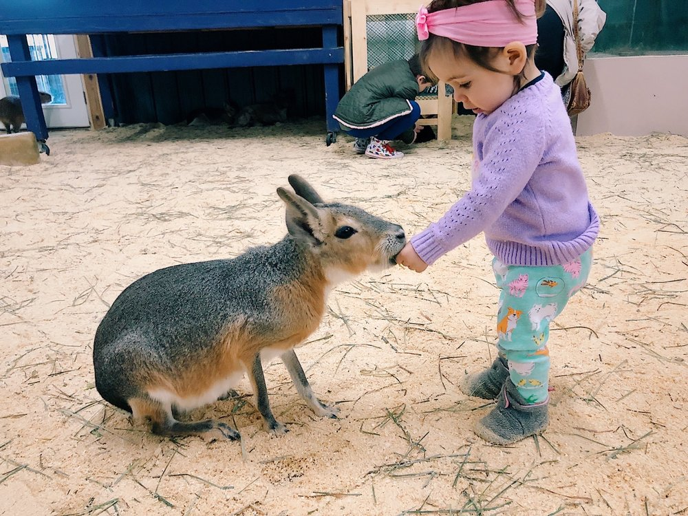 8 Winter Petting Zoos Farms To Visit Now