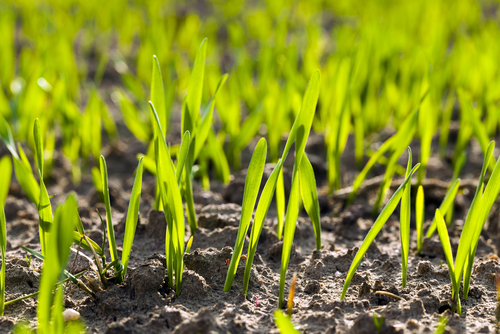 What Is The Best Season For North Attleboro Lawn Seeding And Why?