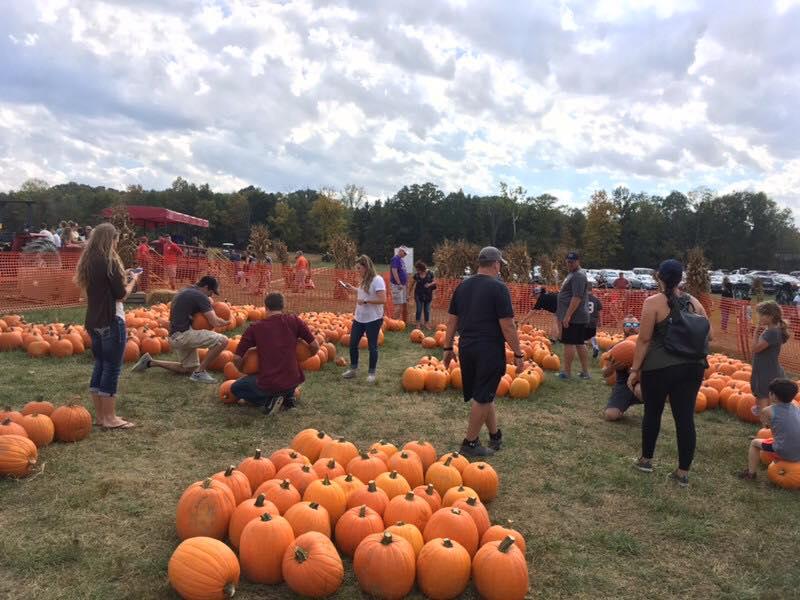lift pumpkins