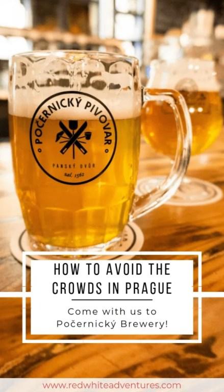 Pocernicky Pivovar is one of the best beer bars in Prague.