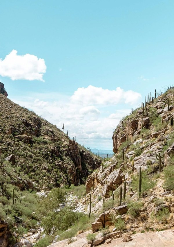 This is one of the amazing views you get when hiking Tucson
