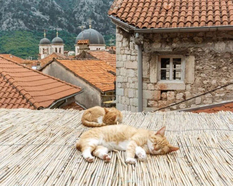 The cats of Kotor sleeping.