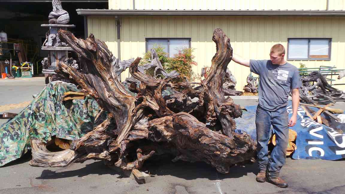 Wood Yard Art Ideas - Rustic Garden Roots Stumps Raw Wood