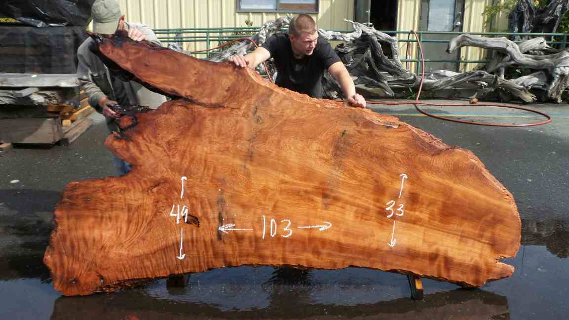 Redwood Burl Wood Slabs - Coffee Table Slab