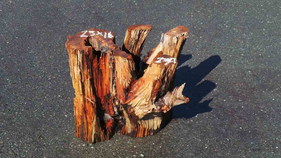 Rustic Coffee Table Bottoms - Branch Table Base