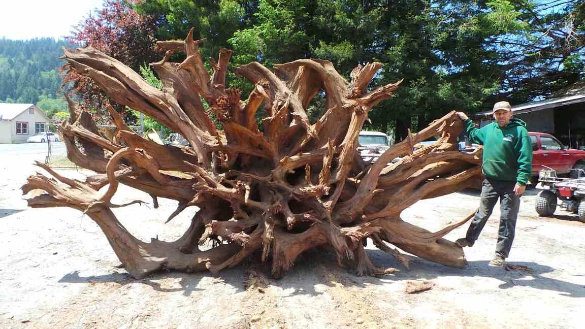 Redwood Dead Tree Yard Art - Decorative Old Wood Snag