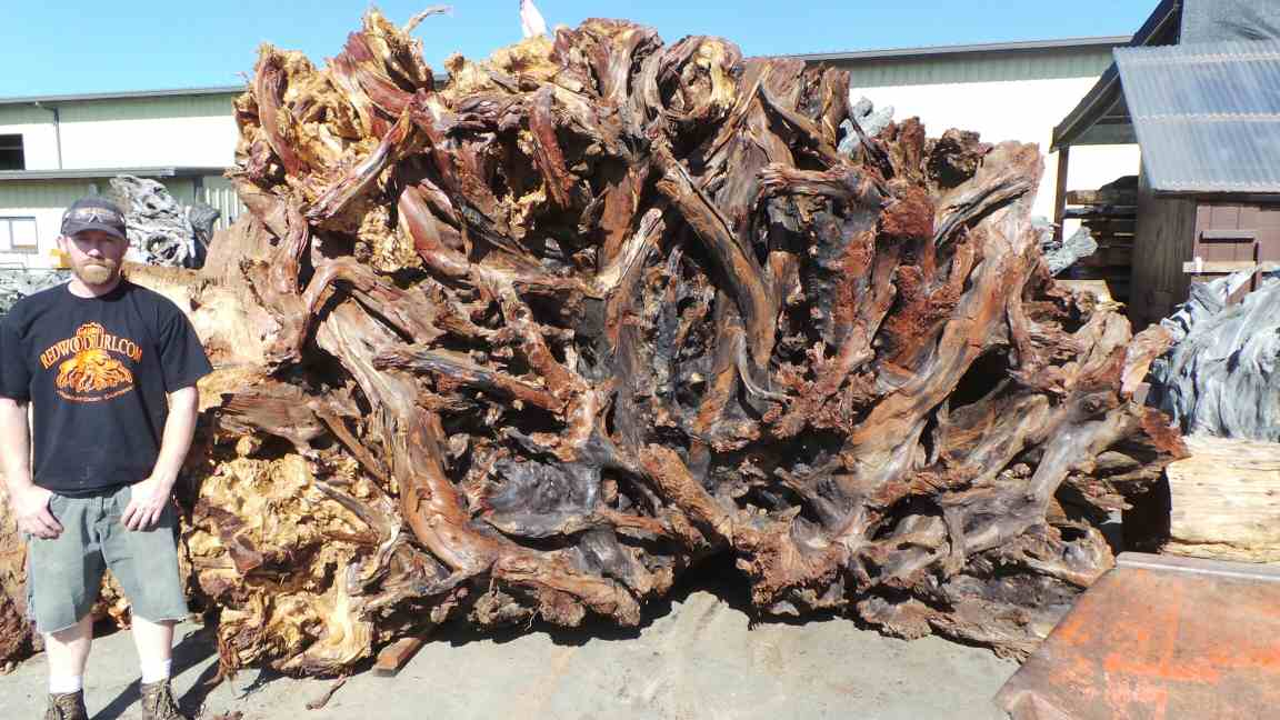 Natural Tree Sculpture Redwood Landscape piece - Lace Burl