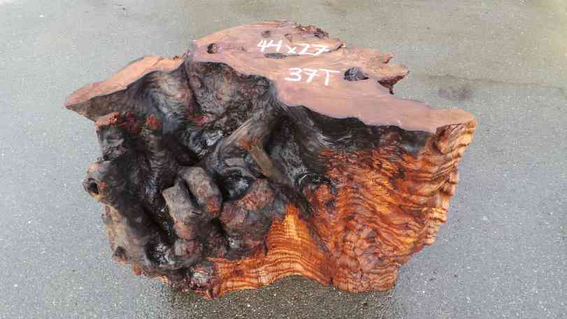 Redwood Tree Root Coffee Table Base Piece